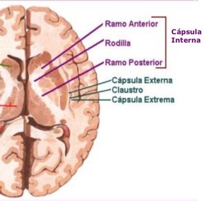 capsulas internas.1