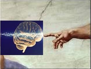 Neurociencia Qué es y qué estudia