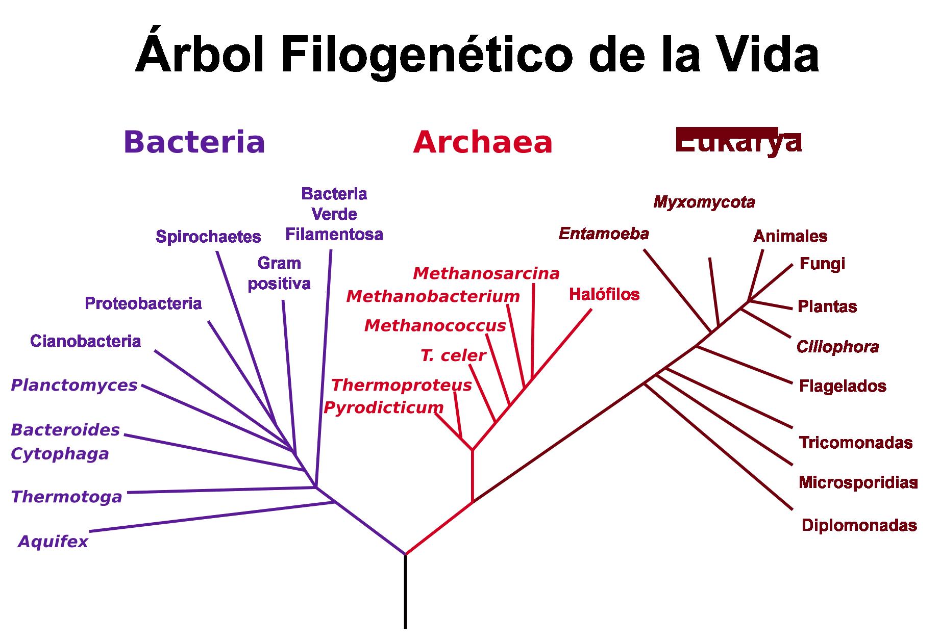 Abol_filogenètico