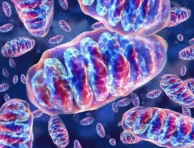 origen celula eucariota