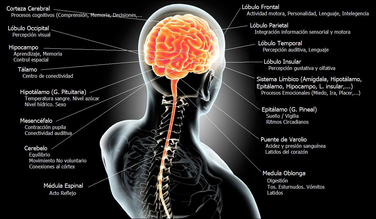 Resumen Sistema Nervioso Central