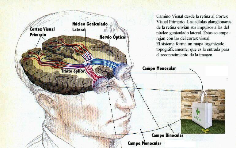 Neurociència